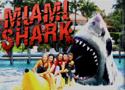 Miami Shark Game